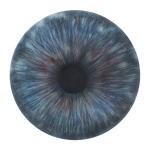 Iris (elemento dell'installazione IRIDE), 2011, acquerello - china e pastello su carta, 20 x 20 cm