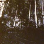 The shade of the wood, 2007, olio su tela, cm 80x141