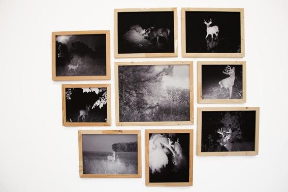 DEER CROSSING (Hahnemühle Paper, wooden frames)